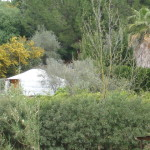 Yurt from orange grove