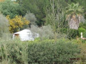 Yurt from orange grove