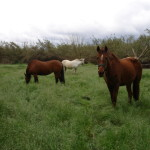 Our horses at Finca Azahar